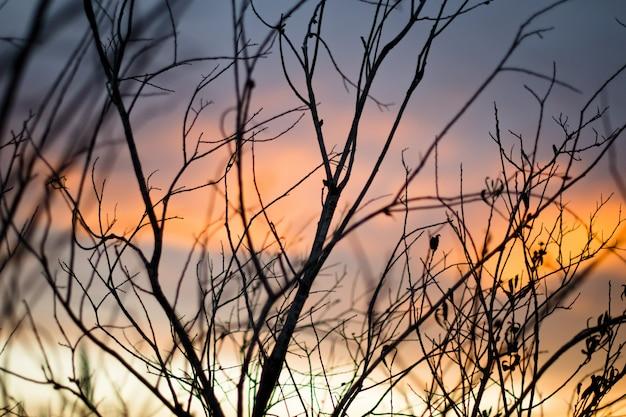 Mooi schot van een kale boom met het adembenemende uitzicht op de zonsondergang