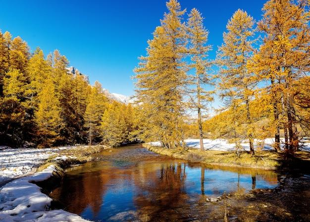 Mooi schot van een kleine rivier die door een sneeuwbos met pijnbomen in de loop van de dag stroomt