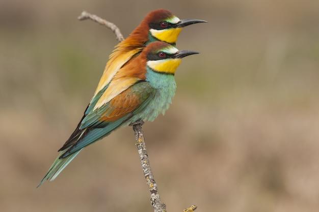 Mooi schot van een mannelijke vogel van de bruine kiekendief op het logboek in het bos