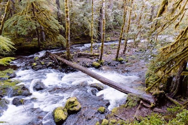Mooi schot van een meer in een bos in een rotsachtig terrein
