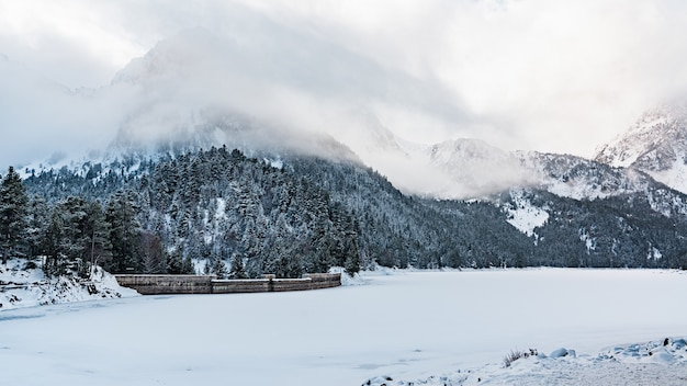 Mooi schot van een mistige dag in een de winterbos dichtbij bergen