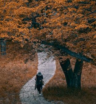 Mooi schot van een persoon die op een weg onder een de herfstboom loopt
