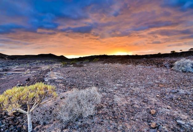 Mooi schot van een rotsachtig struikgebied onder de zonsonderganghemel in de canarische eilanden, spanje