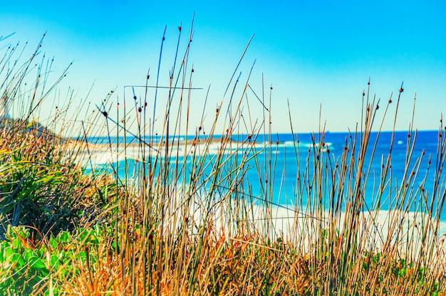 Mooi schot van een strand met een kalme oceaan onder de heldere hemel