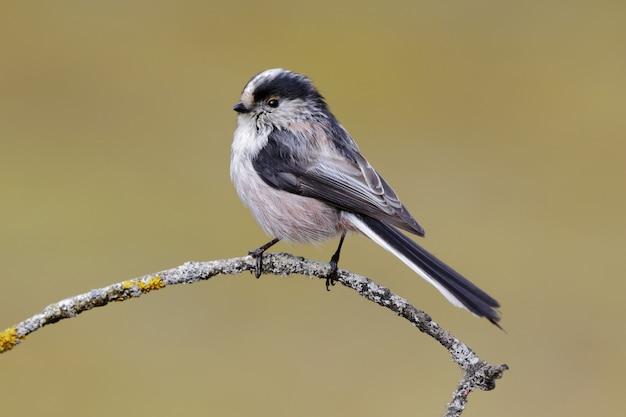 Mooi schot van een vogel met lange staart mees neergestreken op een tak in het bos