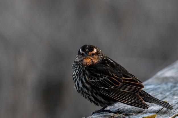 Mooi schot van een vogel op houten logboek in het bos