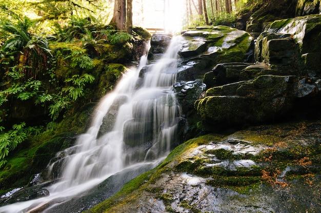 Mooi schot van een waterval omringd door bemoste rotsen en planten in het bos