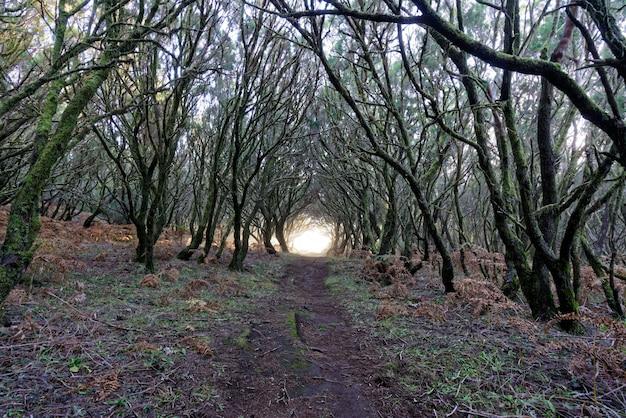 Mooi schot van een weg in bos dat naar een licht leidt dat door bomen wordt omringd