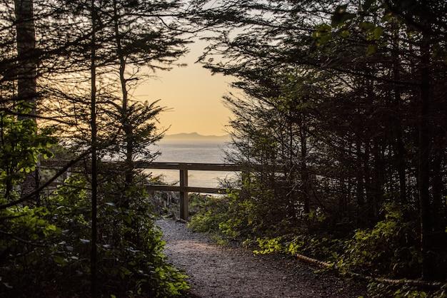 Mooi schot van een weg tussen bomen dichtbij kust