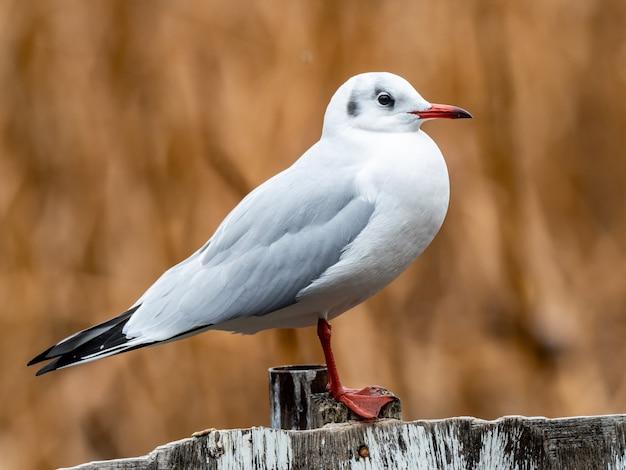 Mooi schot van een witte vogel die zich op een houten omheining bevindt