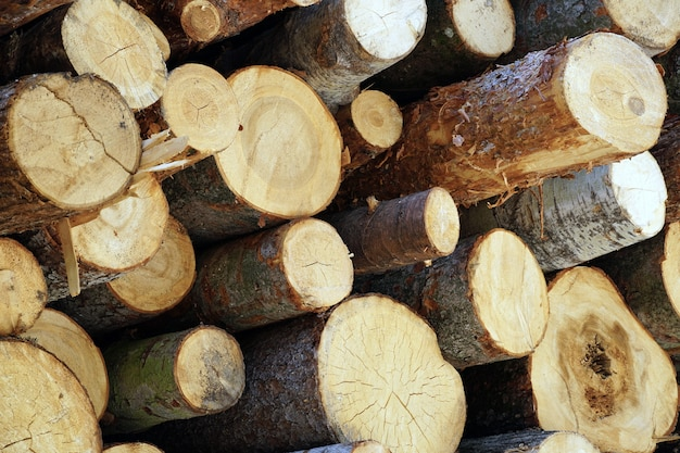 Mooi schot van gesneden houten logboekenbos