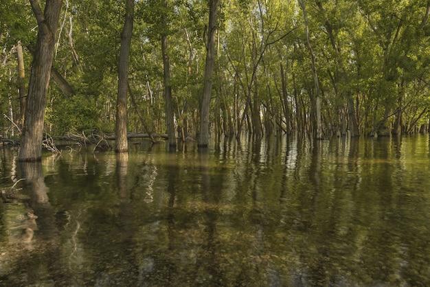 Mooi schot van groene doorbladerde bomen in het water in het bos