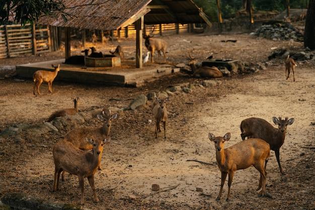 Mooi schot van herten op een gebied dat de camera bekijkt