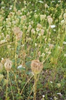 Mooi schot van het gras en de veldbloemen
