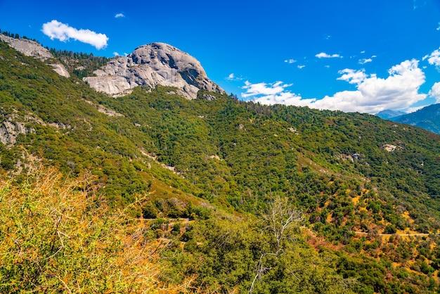Mooi schot van het nationale bos van de sequoia op de achtergrond van de sierra-bergen