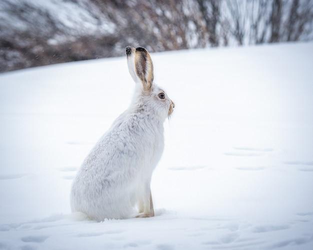 Mooi schot van het witte konijn in het besneeuwde bos