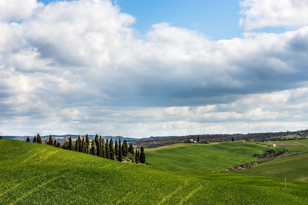 Mooi schot van met gras begroeide heuvels met groene bomen onder een bewolkte hemel