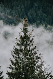 Mooi schot van mistig bos