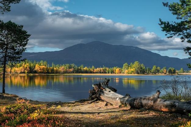 Mooi schot van natuurlijk landschap in de herfst