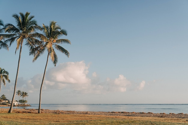 Mooi schot van palmbomen in de kust