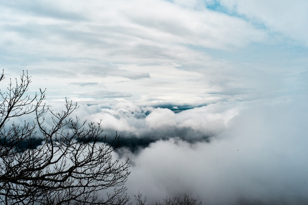 Mooi schot van witte grote wolken in de lucht en boomtakken aan de zijkant