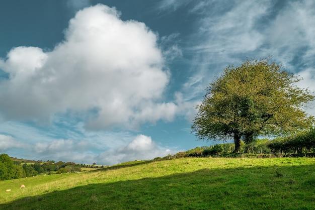Mooi shot van een boom die overdag midden in een greenfield onder de bewolkte hemel staat