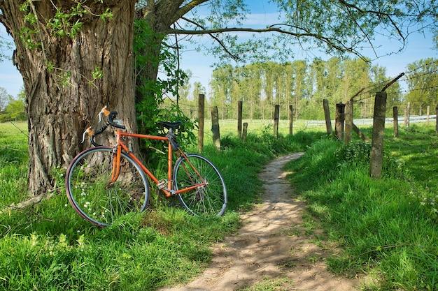 Mooi shot van een fiets die overdag tegen een boom leunt