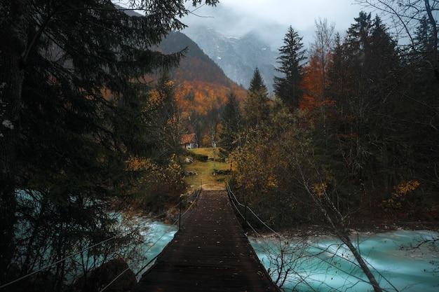 Mooi shot van een houten brug boven de rivier, omgeven door bomen in het bos