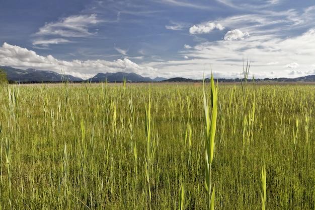 Mooi shot van een landschap van een groen veld met bergen