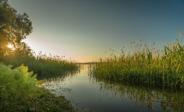 Mooi shot van een meer omgeven door bomen en struiken bij zonsondergang
