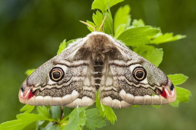 Mooi shot van een nachtvlinder op de groene bladeren van een plant in het bos