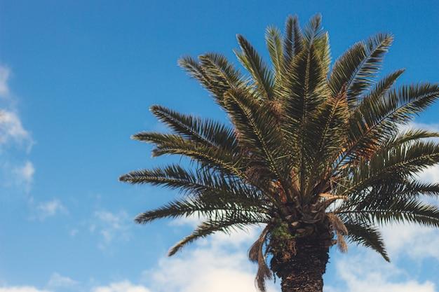 Mooi shot van een palmboom met de blauwe lucht