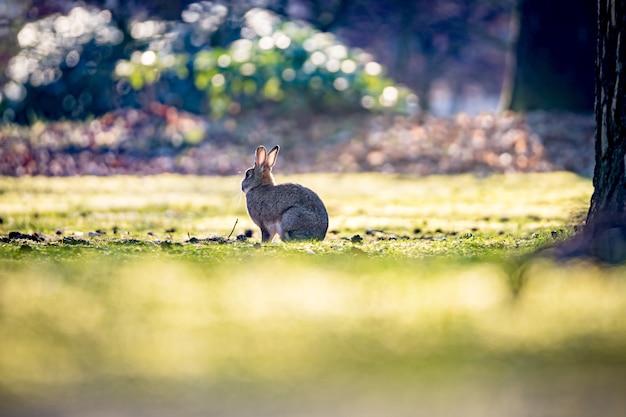 Mooi shot van het konijn op het gras in het veld op een zonnige dag