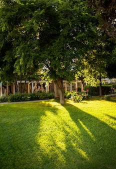 Mooi silhouet van een grote boom met de zon erdoorheen