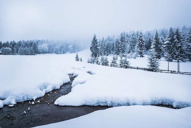 Mooi sneeuwpanorama van een sneeuwjacht door de muur van een dicht naaldbos met sneeuw bedekt