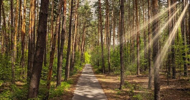 Mooi steegje in het park om te wandelen in een zonnige zomerdag met zonnige balken. loopbrug pad met groene bomen in het bos.