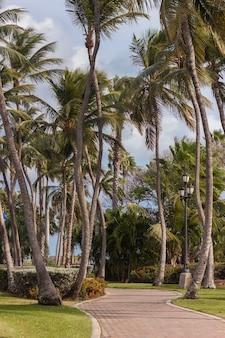 Mooi steegje met palmbomen