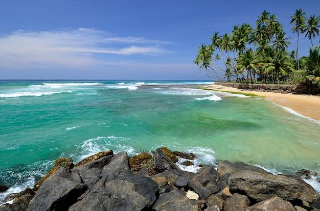 Mooi strand landschap in sri lanka