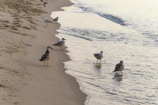Mooi strand levensstijl concept