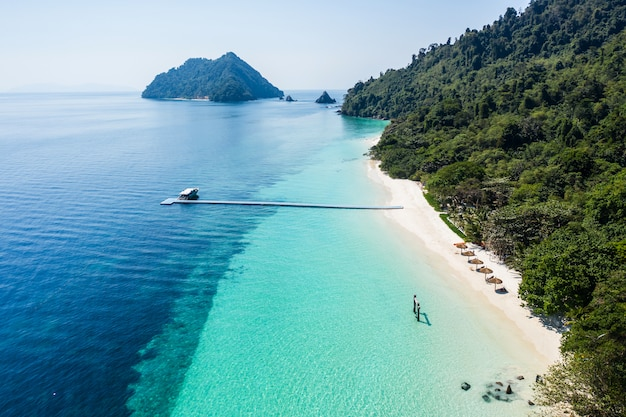 Mooi tropisch strand met prachtig bos