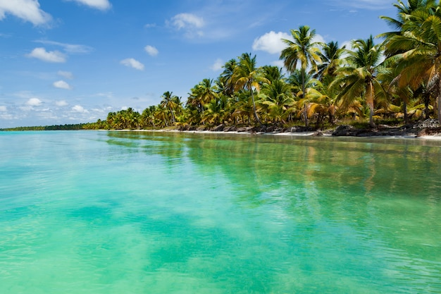 Mooi tropisch strand met wit zand, kokospalmen en turquoise zeewater van het caribisch gebied.