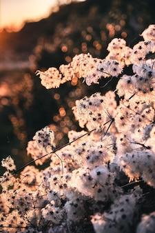 Mooi van een schattige plant in de cote d'azur (franse rivera), frankrijk