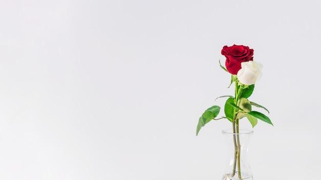 Mooi vers licht en rode bloemen in vaas met water