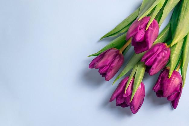 Mooi vers purper tulpenboeket