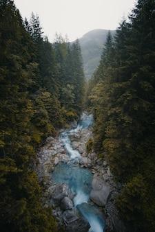 Mooi verticaal schot van een rivier die tussen bomen en stenen stroomt