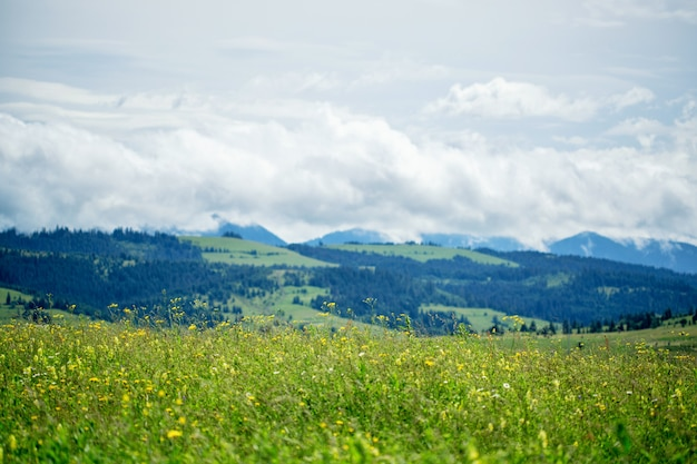 Mooi weidegebied met wilde bloemen met bergen met wolken.