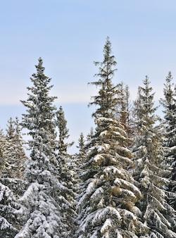 Mooi winterlandschap met besneeuwde bomen