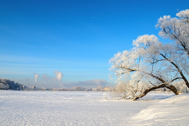 Mooi winterlandschap met sneeuw. takken van de bomen zijn prachtig met sneeuw bedekt.