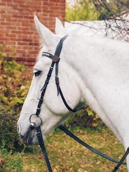 Mooi wit paard in profiel. fotografie van dieren.