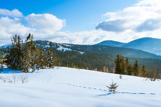 Mooi zonnig landschap van pluizige sparren die groeien tussen witte sneeuwlaag tegen een muur van heuvels en een bos met witte wolken en een blauwe lucht op een ijzige dag.
